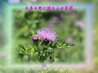 フォト花575交心zrw2501『 少年を野に放たんか花薊 』