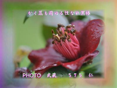 『 かく蕊も萌ゆる性なれ黒椿 』フォト花交心qw0710