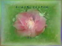 『 赤い血の思い深まる夾竹桃 』妄恋575交心
