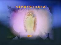 『 七変化面を伝うは血か涙 』妄恋575交心tt1504
