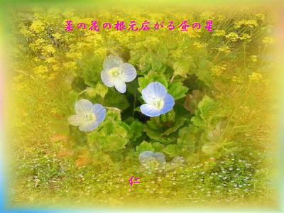 フォト575『 菜の花の根元広がる昼の星 』tx0113