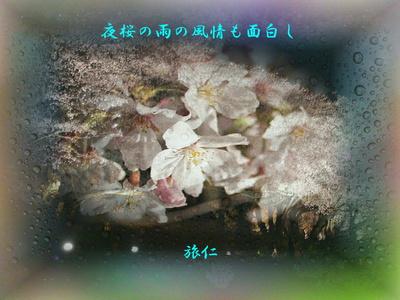 フォト575『 夜桜の雨の風情も面白し 』tx2704