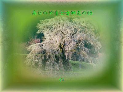 『 再びのやまと古郷花の旅 』妄恋575交心