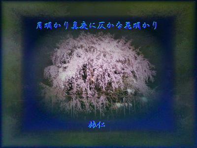 フォト575『 月明かり真夜に仄かな花明かり 』
