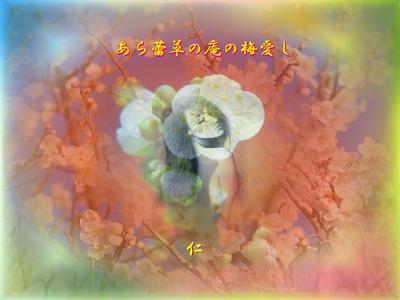 フォト575『 あら蕾草の庵の梅愛し 』