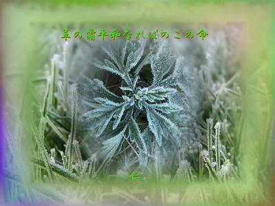 フォト575『 草の霜平和なればのこの命 』
