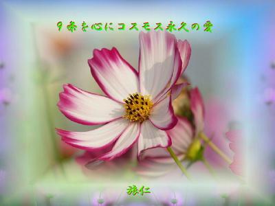 フォト575『 9条を心にコスモス永久の愛 』tq0602
