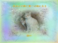 『 花冷えや猫と遊べば猫になる 』めぐり逢い良寛さんzw0201sw03