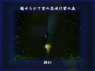 フォト575『 魅せられて空の花咲け蛍の夜 』st2209