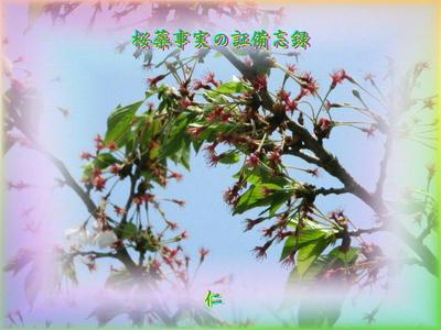 『 桜蘂事実の証備忘録 』平和の砦575交心zrw1302