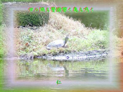 フォト平和の砦575『 世の隅も警鐘響く亀も鳴く 』zrx1201