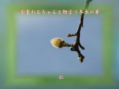 フォト平和の砦575『 吾変わるちゃんと物言う冬木の芽 』zry0206