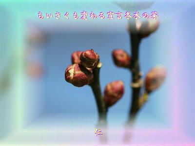『 ちいさくも変わる宣言冬木の芽 』平和の砦575交心zry0606