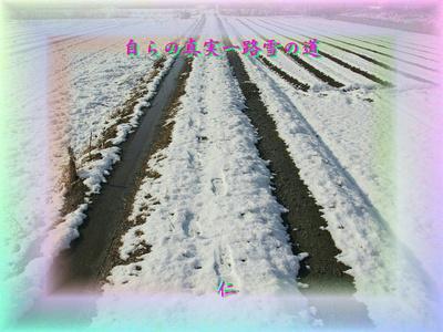 『 自らの真実一路雪の道 』平和の砦575交心zry1207
