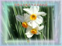 『 希望あれ孫子の未来水仙花 』平和の砦575交心zsk1406