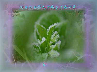 『 何ものも持たず残さず霜の草 』余命575交心zsm3001