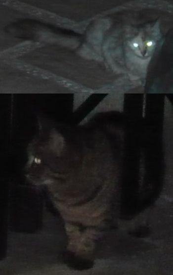野良猫くん