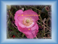良寛さんの俳句『 真昼中ほろりほろりと芥子の花 』