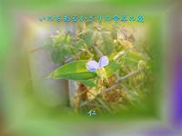 『 いのちあるかぎりの命草の花 』遊行相聞歌575交心