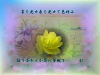『 裏を見せ表を見せて色好み語り合わんか花に夢観て 』