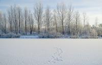 温暖化でシベリアの永久凍土が溶け高床式の建物が傾く