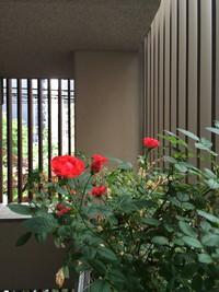 階段室の花