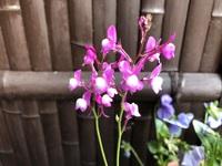 玄関の花です。
