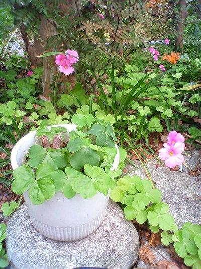 ほらね、ピンクの花。