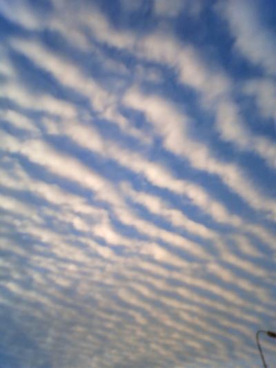 うろこ雲ですね。