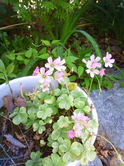 小さくて可愛い花ですね。