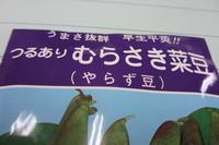 いんげん・やらず豆、どっちでもいいか!!
