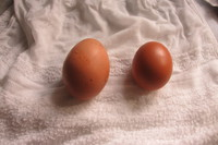 つまめる卵の黄身