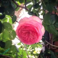 お花を楽しむシーズン♪