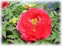 美しい花のように..。o○☆