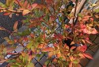 あんねいの  秋