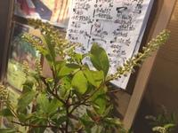 今日の   花