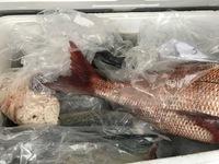 魚市場!!