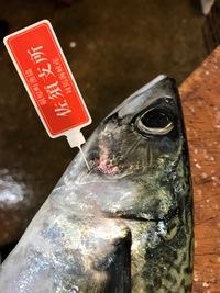 佐須の   鯖