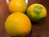 完全無農薬の     レモン
