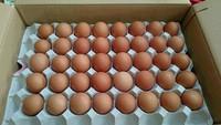 いただいた卵