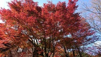 築上郡の紅葉