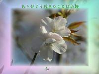 『 ありがとう別れのことば山桜 』物真似575春zrw0505