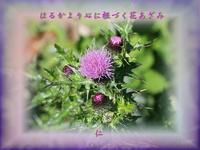 『 はるかより心に根づく花あざみ 』物真似575春zrw2002
