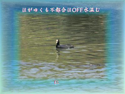 『 はがゆくも不都合はOFF水温む 』物真似575春zrx0802