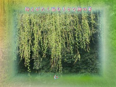 『 抑えがたく面白きかな柳の芽 』物真似575春zrx1002