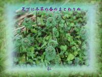 『 足下に冬草の香のまとわりぬ 』物真似575冬zry0105