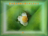 『 茶の蕊の実隠る前に刈られけり 』物真似575冬zsk0207