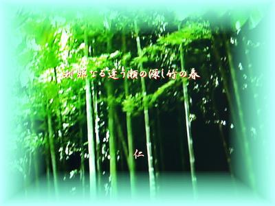 フォト575『 刹那なる逢う瀬の深し竹の春 』zbr2005tm14