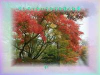 『 共に見て念いそれぞれ散る紅葉 』フォト575平和の砦zsm2202