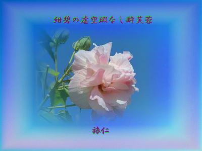 フォト575『 紺碧の虚空瑕なし酔芙蓉 』zdq0202